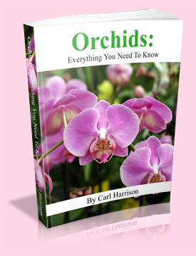 Orchid Care Secrets Revealed The Orchid Resource